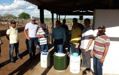 Governo doa sêmen para agricultores de Olho D'água das Flores, Major Izidoro e Jaramataia